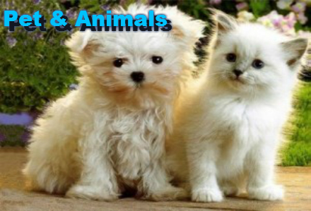 Pet & Animals
